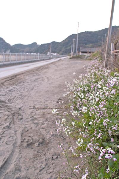 海岸の花と道