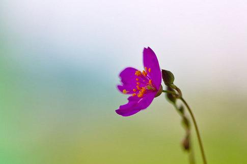 草花火の花