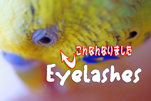 Eyelashes_osugi