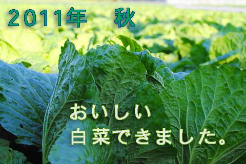 白菜2011年11月