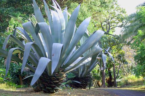 初島植物公園