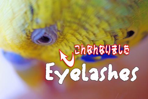 Eyelashes_osugi