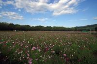 kosumosu.png