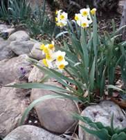 spring (6).JPG