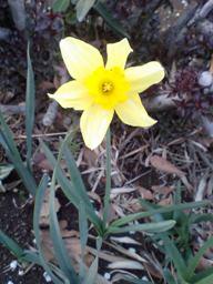 spring (7).JPG